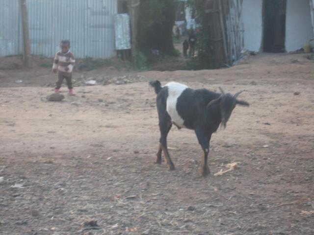 village-life