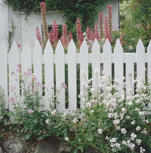 Picket Fence a
