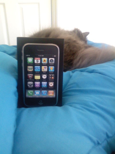 iphone cat excited NOT