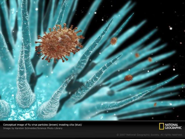 flu-virus-e06074-sw